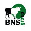 Отзывы о компании  BNS group